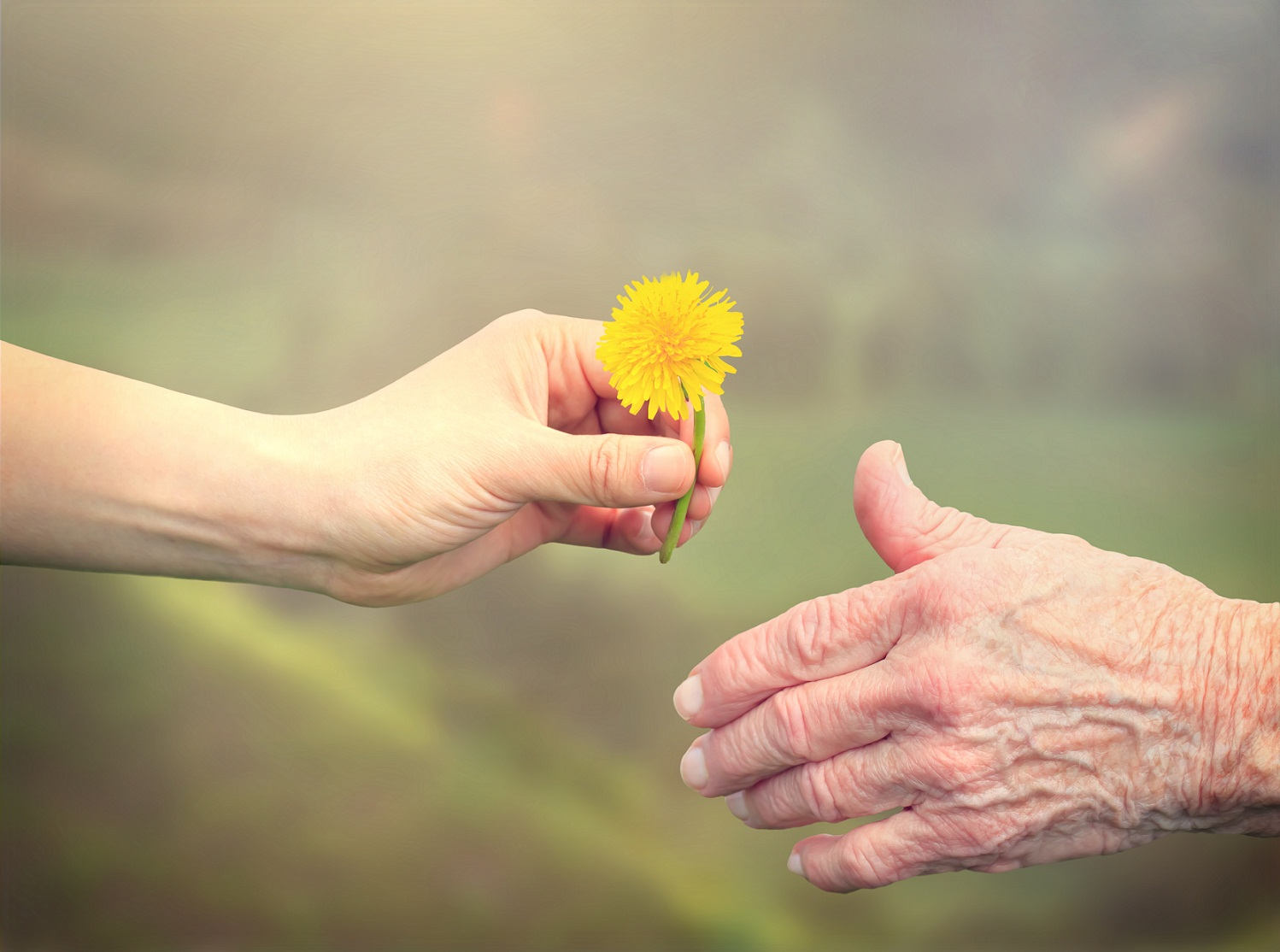handing a flower to an older woman