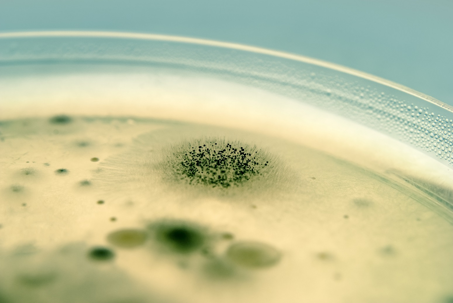 mold and bacteria